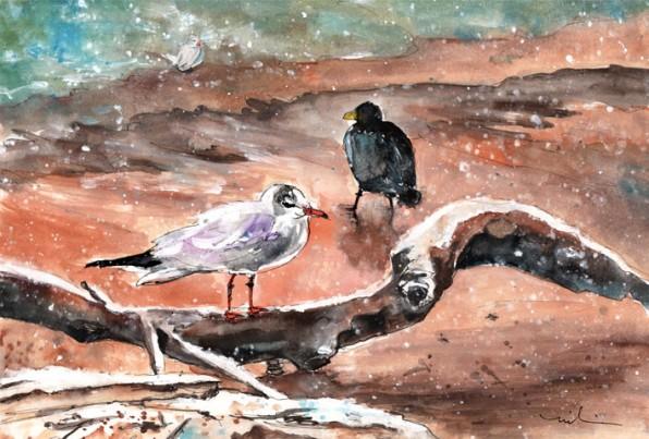 Oiseaux Du Lac De Constance