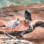 Oiseaux Sur Le Lac De Constance En Hiver