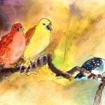 Oiseaux de Gran Canaria 02