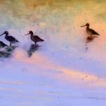 Oiseaux de Camargue 02