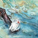 Canard Blanc Sur Le Lac De Constance En Hiver