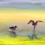 La Camargue – Oiseaux 03