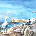 Mouettes D'Essaouira