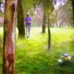 Oiseaux et Balles de Golf 01