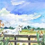 Gruissan – Cheval Blanc