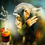 L'Avent d' Un Chimpanzé