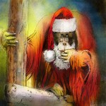 Orang-outang Père Noël