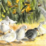 Les Pigeons de Benidorm