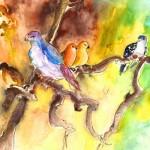 Oiseaux de Gran Canaria 01